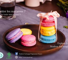 macarons - Do you want to taste macaroons?